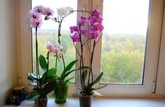 Orchidey pestujem už 17 rokov a toto je zaručený spôsob, ako ich vždy prinútim kvitnúť na maximum: Zlepšovák, ktorý funguje už roky! Roses Gif, House Plants, Glass Vase, Home And Garden, Simple, Nova, Gardening, Medicinal Plants, Beautiful Flowers