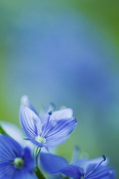 little and blue by nakedlady.deviantart.com on @deviantART