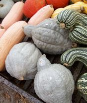 all the varieties of pumpkins/gourds.  the hard part will be deciding what kind to plant
