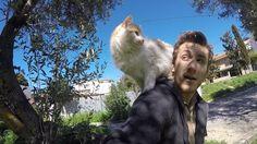 Aδέσποτη γάτα ανεβαίνει σε vegan.Πόσο ''κακιές'' είναι οι γάτες. Γάτα συ...