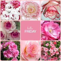 Mood Boards - Created with BeFunky Photo Editor Good Morning Friday, Good Morning Greetings, Good Morning Good Night, Good Morning Wishes, Happy Friday Quotes, Days Of Week, Decoupage, Hello Friday, Joelle
