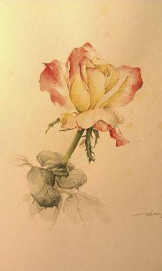 rose Watercolor Rose, Watercolour Painting, Watercolors, Epic Art, Rose Art, China Painting, Artist At Work, Pink Roses, Flower Art