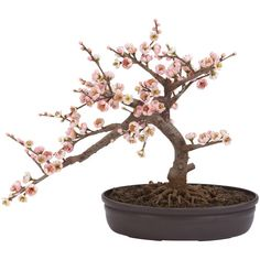 2nd Floor / In The Second Room, Of The Cherise Young Girl's Studio Dressing Room / silk pink cherry blossom bonsai plant.
