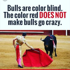 Bulls are red-green #colorblind.  The color red does NOT make them angry. #PrateFamilyEyeCare