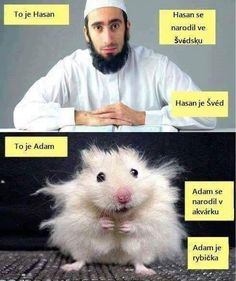 this-is-hasan-he-was-born-in-sweden-hasan-is-swedish-muslim-this-is-misho-he-was-born-in-an-aquarium-misho-is-a-fish-hamster-comparison-trolling. Reaction Pictures, Funny Pictures, Funny Pics, Pedobear, Witty Quotes, Adult Humor, The Hobbit, Troll, Sweden