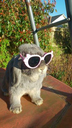 My dwarf lop rabbit in sunglasses