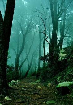 Foggy path...