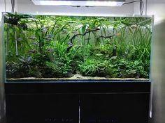 Aquascape planted