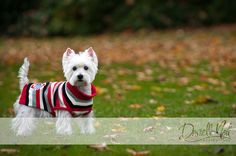 Dear Boyfriend... get me this puppy, and I'll put this Ohio State sweater on it. <3