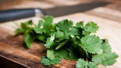 El cilantro es una de las hierbas más eficaces para desintoxicar el cuerpo de metales pesados y otros contaminantes tóxicos. Desintoxique su cuerpo !