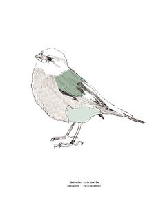 yellow-hammer - geelgors collage with pendrawing - artprint - x 297 mm) - printed on chunky, slightly structured, offwhite and 324 gr. Line Drawing, Drawing Sketches, Fathers Day Coloring Page, Painting Collage, Paintings, Bird Drawings, You Draw, Bird Art, Creative Art