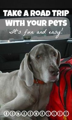 Practical Tips for a Road Trip With Dogs — from a couple who have been traveling with pets for 13 years!  Read here: www.nomadwallet.c...