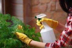 Ράντισμα φυτών με ξύδι – Ένα φυσικό Ζιζανιοκτόνο! Olive Garden, Spray Bottle, Amazing Gardens, Gardening Tips, Cleaning Supplies, Nashville, Outdoor Decor, Airstone
