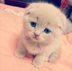 awww...sad kitty :(