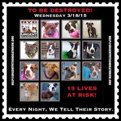 TO BE DESTROYED: 13 beautiful dogs to be euthanized by NYC ACC- WED 3/18/15. This is a VERY HIGH KILL shelter group. YOU may be the only hope for these pups! ****PLEASE SHARE EVERYWHERE!To rescue a Death Row Dog, Please read this: http://urgentpetsondeathrow.org/must-read/ To view the full album, please click here: https://www.facebook.com/media/set/?set=a.611290788883804.1073741851.152876678058553&type=3