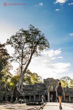 ruínas de sítio arqueológico khmer no camboja. um dos muitos templos próximos a angkor wat. mulher caminha em direção às ruínas sobre as quais enorme árvore cresce fincando suas raízes