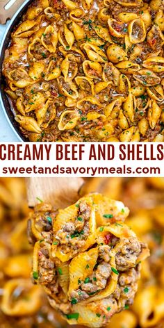 Creamy Beef and Shells is a hearty pasta dish that is perfect for a quick dinner for the whole family #dinner #sweetandsavorymeals #beefandshells #beef #shells #pasta Health Dinner, Think Food, Ground Beef Recipes, Healthy Ground Beef, Food Dishes, Main Dishes, Healthy Pasta Dishes, Dinner Dishes, Dinner Menu