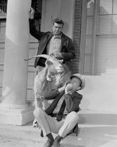 Sheriff Andy Taylor: Somewhere wandering loose around Mayberry is a loaded goat.