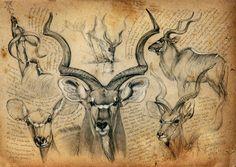 Resultado de imagen de wildlife artist marcello pettineo