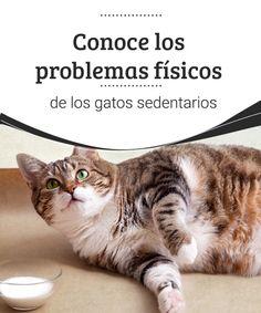 Conoce los problemas físicos de los gatos sedentarios  Los gatos que viven en hogares, especialmente si son cerrados, pueden llegar a ser gatos sedentarios, una de las causas del sedentarismo. #Felinos #salud #sedentarismo #ejercicio