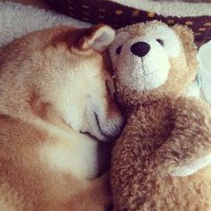 A dog and his toy bear