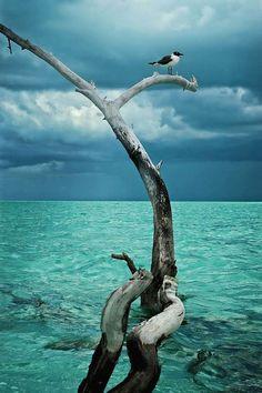 Photo: Gull , Bahamas