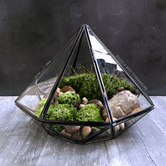 Geometric Glass Diamond Terrarium with Plants