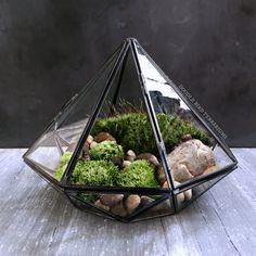 Geometric Glass Diamond Terrarium with Plants by DoodleBirdie