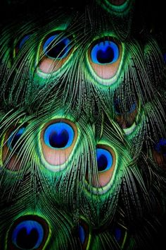 Each of these peacock feathers has been individually, hand painted by our lovingly Heavenly Father!