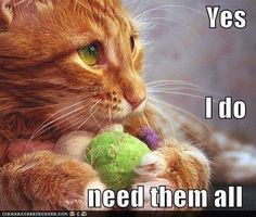That is one smart cat! =)