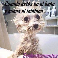 Así nos vemos cuando estamos en la ducha y suena el teléfono o llega un mensaje importante... Emoticono like si te ha pasado! #DondeNacenLosEstilos www.fashoop.com