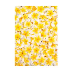 Yellow flowers ❤ liked on Polyvore featuring backgrounds, flowers, yellow, photo, pictures and wallpaper