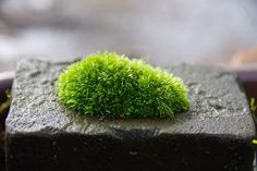 苔 - 小さな緑のインテリア こけや