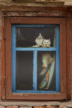 Abandoned cats by Stanislav Gerasko on - Carina Animals And Pets, Funny Animals, Cute Animals, Wallpaper Iphone Cute, Cute Wallpapers, Kittens Cutest, Cats And Kittens, Tie Dying Techniques, Iranian Art