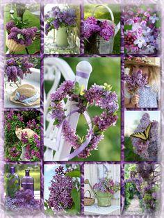 Lovely purple garden
