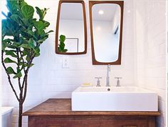 Fiddle Leaf in bathroom from Houzz