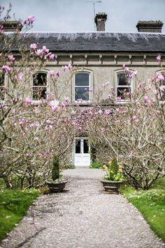 the magnolia manor .. X ღɱɧღ ||