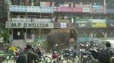 GALERINHA INFANTIL: O passeio do elefante selvagem pelas ruas da Índia...