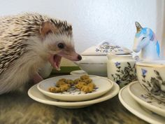 Hedgehogs-- they are such dainty eaters...