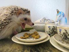 Obama a No-Show at Hedgehog's Tea Party
