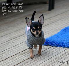<3 Chihuahua, French Bulldog, Dogs, Cute, Animals, Animales, Animaux, French Bulldog Shedding, Pet Dogs