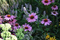 Rostlinní lékaři pro užitkovou zahradu | HOME Plants, Gardening, Lawn And Garden, Plant, Planets, Horticulture