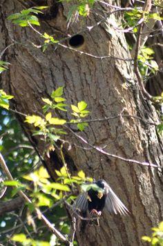 wald°sinnen: Wald°Vögel {2} oder Ein Tag in einer alten Esche Alter, Bird Feeders, Outdoor Decor, Nature, Animals, Home Decor, Woodland Forest, Mornings, Nurseries