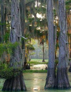 Cypress Forest, Louisiana