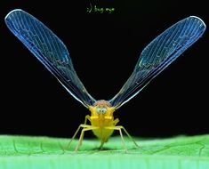 Fotografia hi ! de bug eye :) na 500px