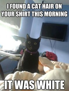 Overly Attached Cat-made me laugh!