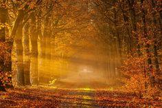Forests Autumn Trees Foliage Fog Nature