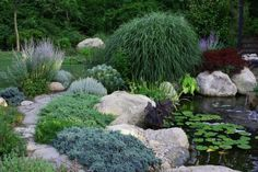 Matisse Garden Pond Walkway - traditional - landscape - boston - Amy Martin Landscape Design Creeping juniper is particularly effective in the winter garden; combine it with boulders in naturalistic open areas or use it to stabilize slopes. Garden Oasis, Garden Pond, Lush Garden, Garden Trees, Water Garden, Garden Art, Pond Design, Landscape Design, Blue Star Juniper