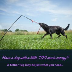 Need help wearing out your big dog?  Tether Tug- an interactive outdoor tug toy - www.tethertug.com