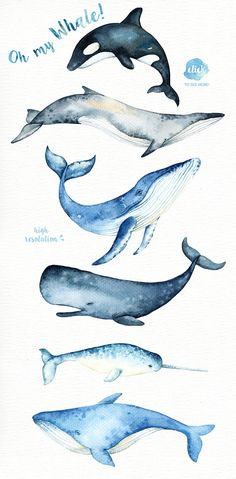 Oh My Whale! Watercolor Clip Arts by everysunsun on Creative Market Oh My Whale! Watercolor Clip Arts by everysunsun on Creative Market - Unique Wallpaper Quotes Whale Painting, Watercolor Whale, Watercolor Animals, Painting & Drawing, Watercolor Paintings, Watercolour, Watercolor Wedding, Whale Illustration, Watercolor Art
